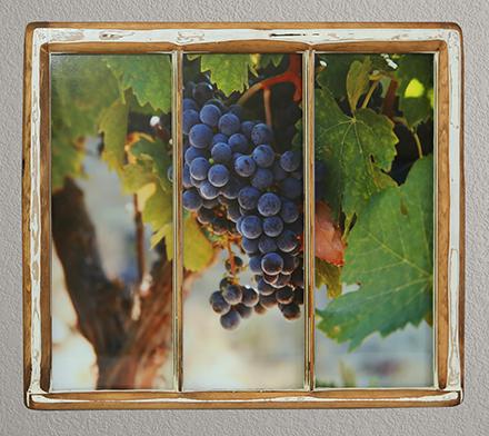Grapes (1)